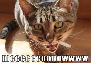 Cat Meow Meme - fireworks maze funny cat memes and caricature for online
