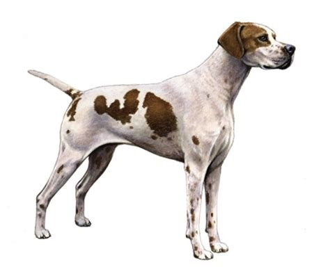 identify breed by characteristics identifying mixed breed dogs breeds picture