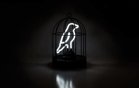 Bird In A Cage neon bird in a cage content gallery a bird shaped neon