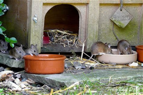 How To Stop Rats Coming Into Garden by Blueridgepetcenter 5 Ways To Keep Rodents Out Of Your
