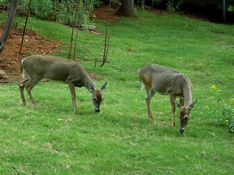 what can i feed my what can i feed deer in my backyard what can i feed the deer in my backyard 28