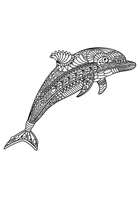 delfine  delfine malbuch fur erwachsene