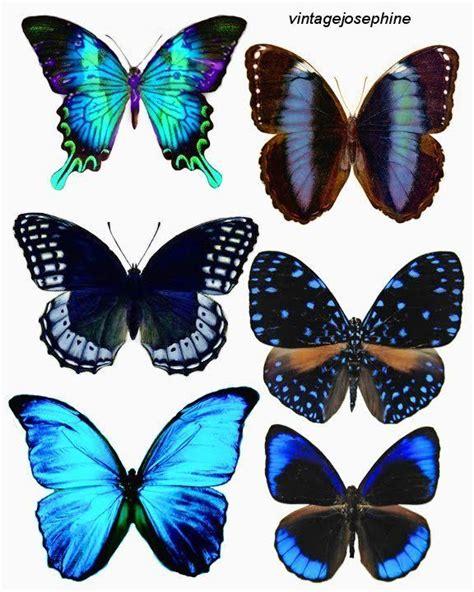 blue butterfly tattoo meaning best 25 blue butterfly ideas on blue