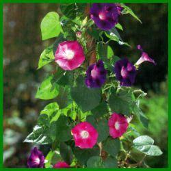 heckenpflanzen immergrün winterhart schnellwachsend 67 die besten 25 schnell wachsende pflanzen ideen auf
