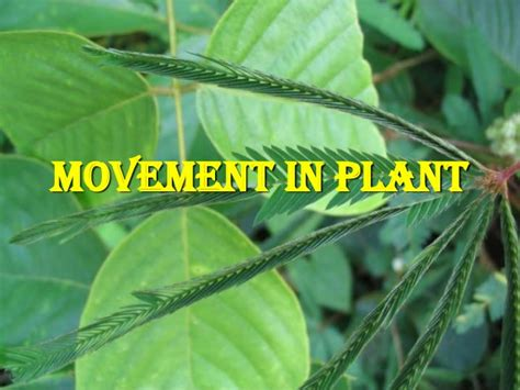 nastic and tropic movement in plants 8 8 movement in plant