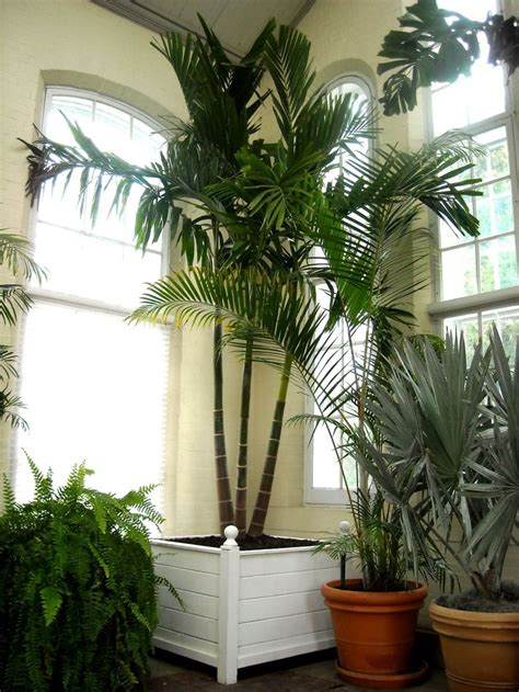 buy house plants 25 best ideas about indoor palms on pinterest palm