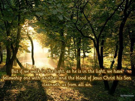 Walk In The Light by As Trees Walking Cccooperagency S