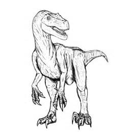 velociraptor coloring page velociraptor coloring pages dinosaurs pictures and facts