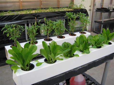 hydroponic grow kits the indoor gardener ebb flow hydroponics system 12 site flo n drip garden