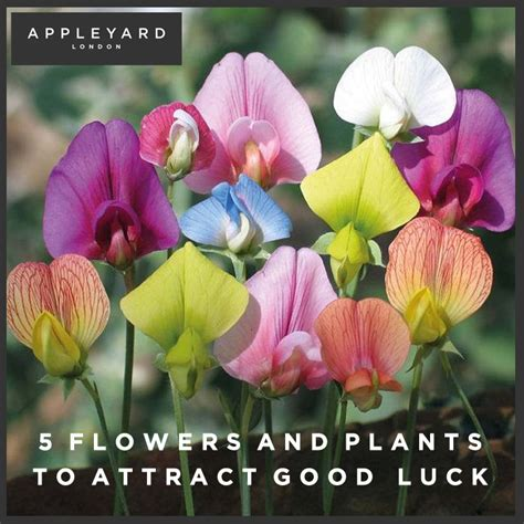 the best plants to bring life to your bathroom 5 flowers and plants to attract good luck appleyard blog