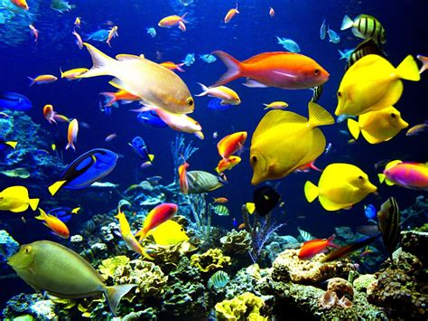 Coral Color Home Decor by Ocean Fish Best Animals