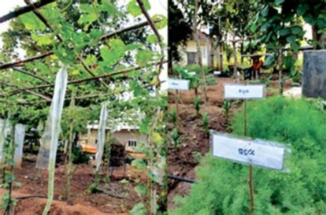 home gardens in kegalle
