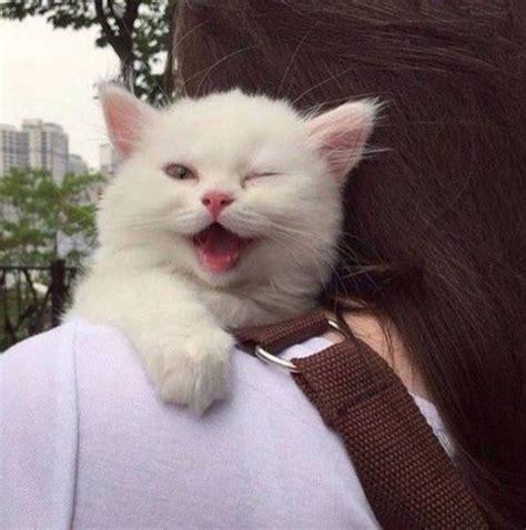 imagenes de gatitos alegres صور جميلة معبرة 1171621 شبكة ابو نواف