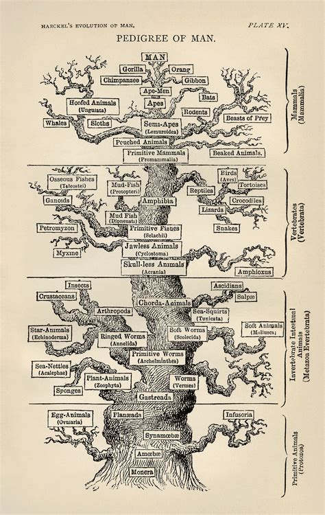 file tree of by haeckel jpg