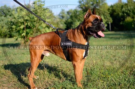 k9 search and rescue troubleshooting practical solutions to common search problems k9 professional series books any activity and any weather light weight boxer harness