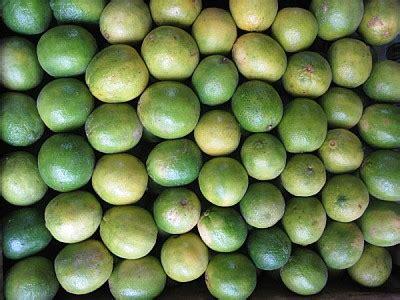 imagenes de naranjas verdes imagen de fruta frutas aji ajies morron morrones verdura