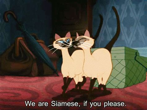 Thanks Aunties We Are The Cat In The Flickr by Siamese Gif Find On Giphy