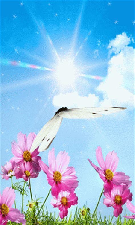 imagenes de rosas y mariposas bellas imagenes bonitas con movimiento de flores con una mariposa
