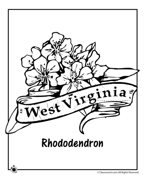 indiana state flower coloring page indiana state flower coloring coloring pages