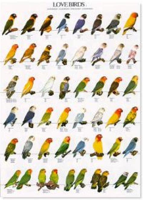 poster lovebirds 2 wa australia wide delivery