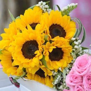 descargar imagenes variadas gratis im 225 genesflores com fotos gratis rosas flores bonitas