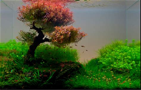 award winning aquascapes aquascaping