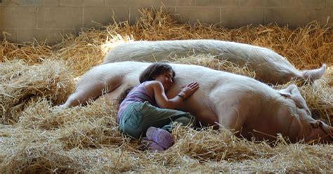 farm sanctuary farm sanctuary a haven from the animal holocaust by