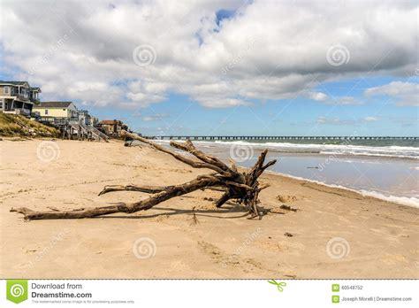design elements virginia beach va driftwood stock photo image 60548752