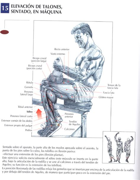rutina efectiva aumentar masa 2016 rutina super efectiva para aumentar masa muscular en