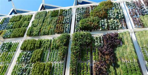 strutture per giardini verticali verde verticale perch 232 un giardino verticale