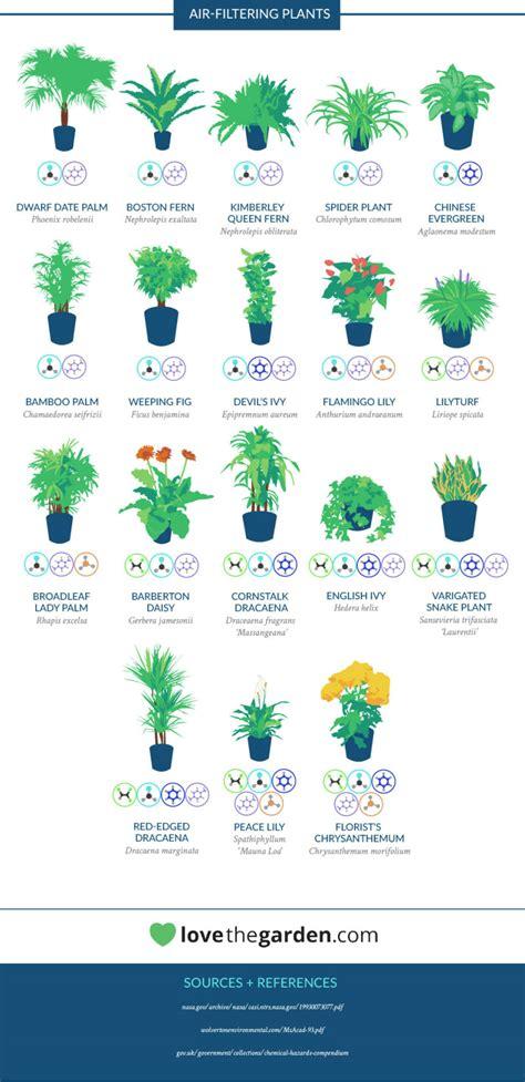 nasa best plants nasa empfiehlt diese zimmerpflanzen machen die sauberste luft