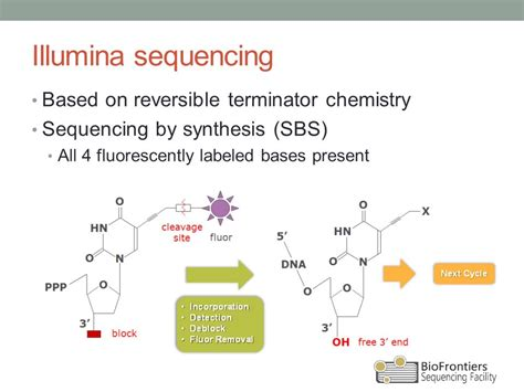 illumina solexa sequencing introduction to illumina sequencing ppt