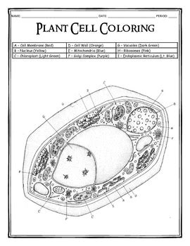 plant cell coloring by dustin hastings teachers pay teachers