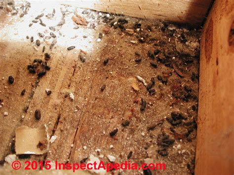 signs of rats in house house mouse nest www pixshark com images galleries with a bite