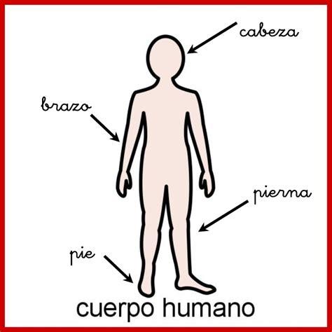 imagenes sorprendentes cuerpo humano imagenes del cuerpo humano para colocar sus partes imagui