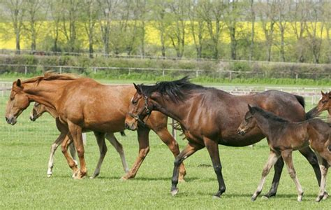how much does it cost to breed a horse horse hound