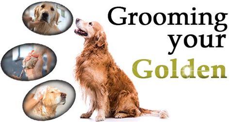 golden retriever grooming tips best 25 golden retriever names ideas on puppy names a puppy