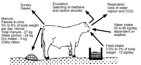How Many Stools Per Day by Manure Production Data