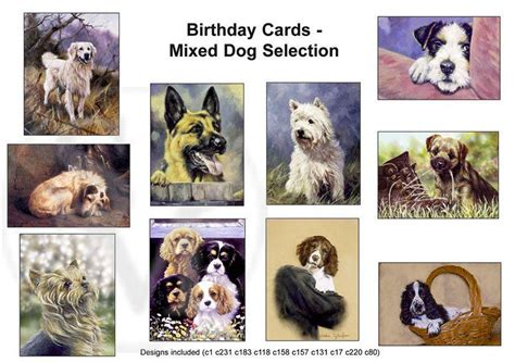 breed cards pack of 10 assorted breed birthday cards springer