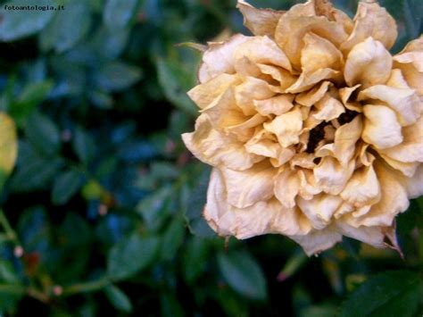 fiori per i morti fiori morti di me stesso