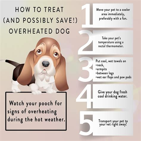 dehydration in dogs recognizing and treating overheating dehydration in dogs