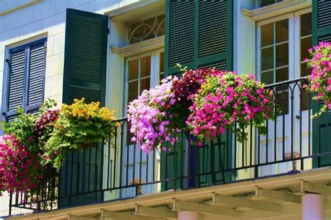 balcony flowers how to choose flowers for balconies in small apartments