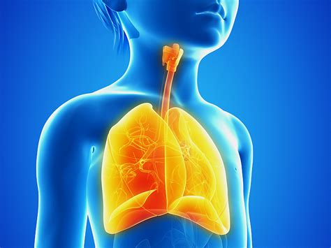 anatomy of a child s lung pediatric pulmonologists price tag increasing for pediatric pulmonary hypertension