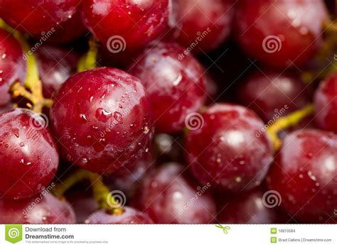 imagenes uvas rojas uvas rojas imagenes de archivo imagen 18810584