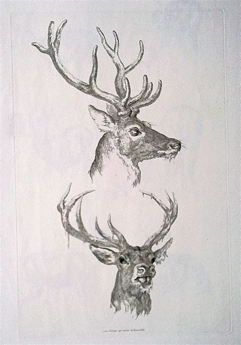 stag head designs 19th century original etching of deer by robert hills