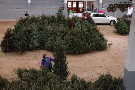 forestry club s 2017 christmas tree sale set for dec 1 3