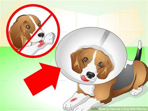 caring for a puppy how to care for a with stitches 10 steps with pictures