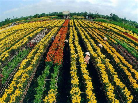 villaggio fiori villaggi di fiori la bellezza tradizionale di hanoi