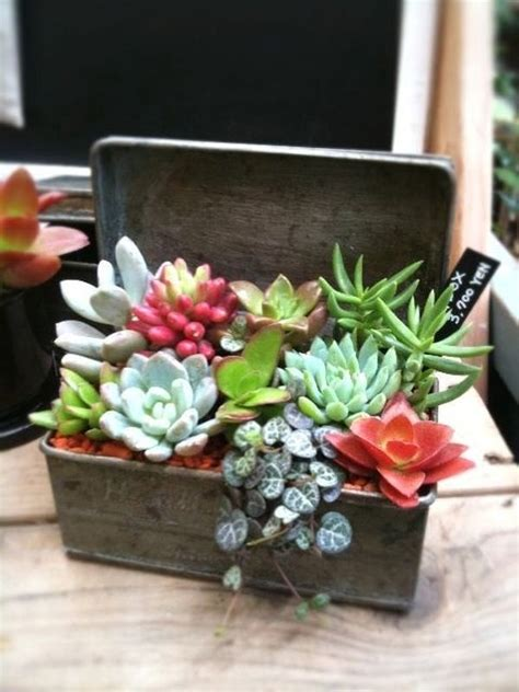 unique planters for succulents how to create and care for your stunning succulent arrangements