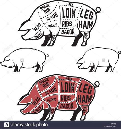 how to butcher a pig diagram butcher diagram scheme and guide pork cuts set of pig